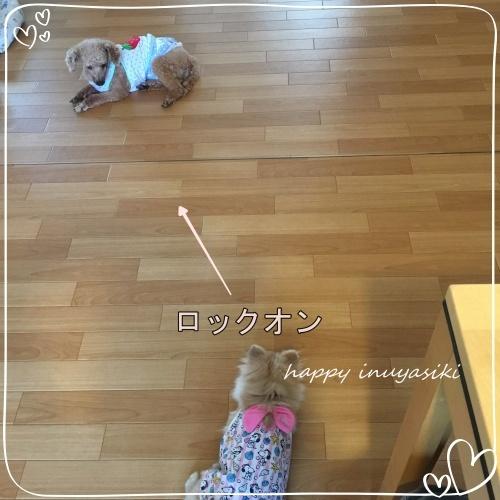 mini2018IMG_6883-2