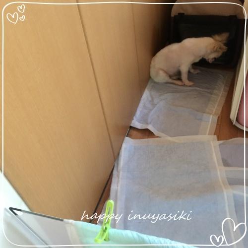 mini2018IMG_1361(1).jpg