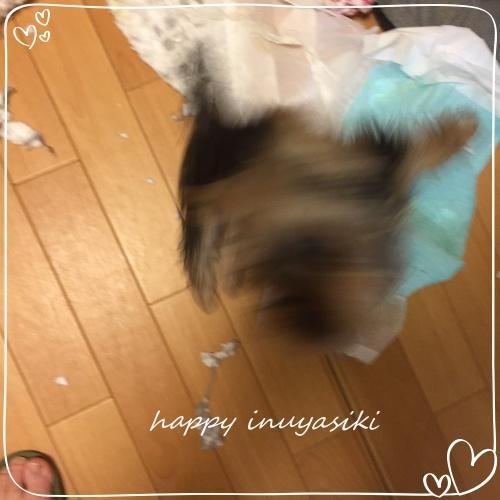 mini2018IMG_3302.jpg