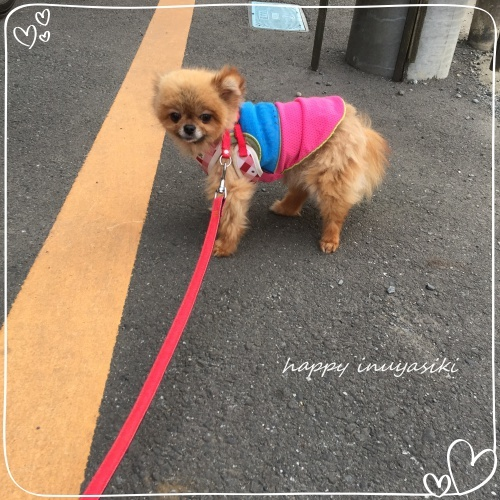 mini2018IMG_5951.jpg