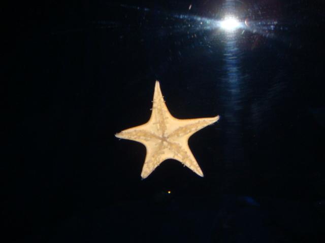 アクアマリン魚4
