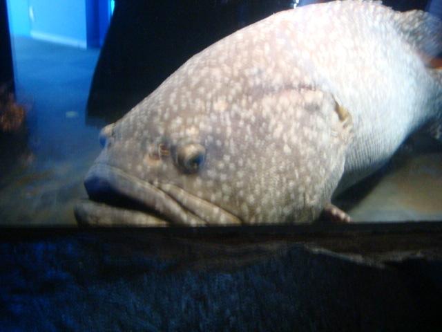 アクアマリン魚1