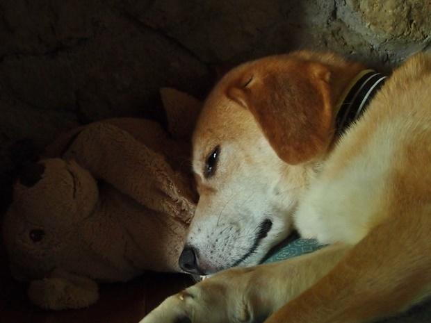 瞑想中の犬