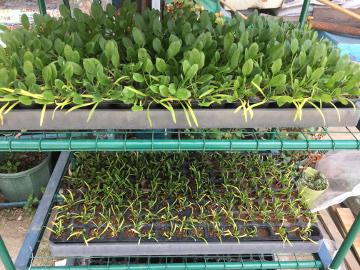 種を蒔いたり苗を植えたり8
