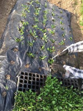 種を蒔いたり苗を植えたり9