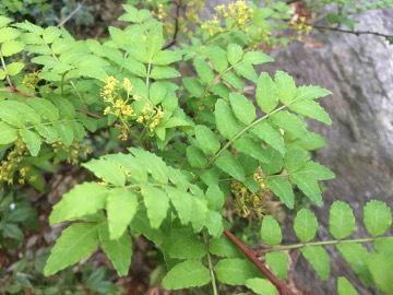 種蒔きと竹の子発送8