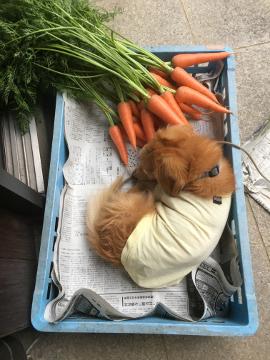 野菜カゴ6
