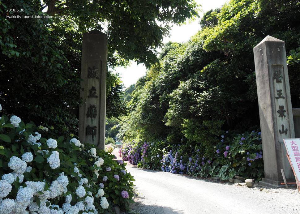 波立薬師例大祭&アジサイレポート! [平成30年7月2日(月)更新]33
