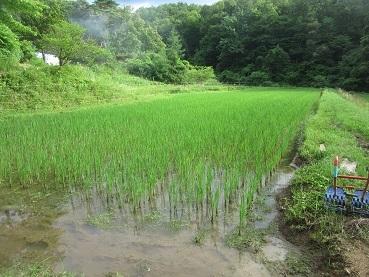 田の水抜き