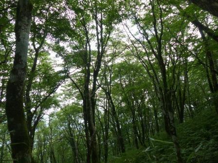 セラピーロードから見える木々