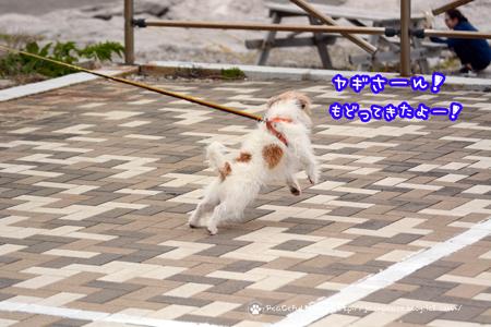 180414_sirasaki21.jpg