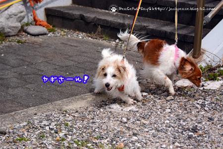 180414_sirasaki9.jpg
