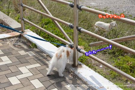 180422_sirasaki11.jpg