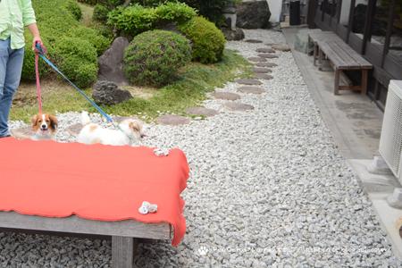 180605_yukimura.jpg