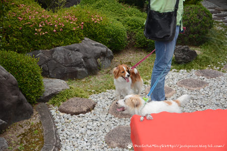 180605_yukimura1.jpg