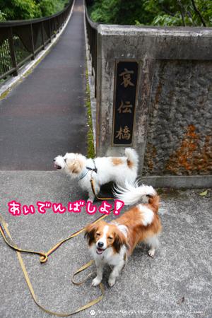 180626_tenkawa7.jpg