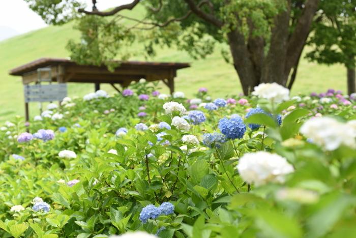梅雨の花7
