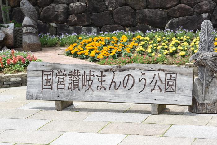 梅雨の花9