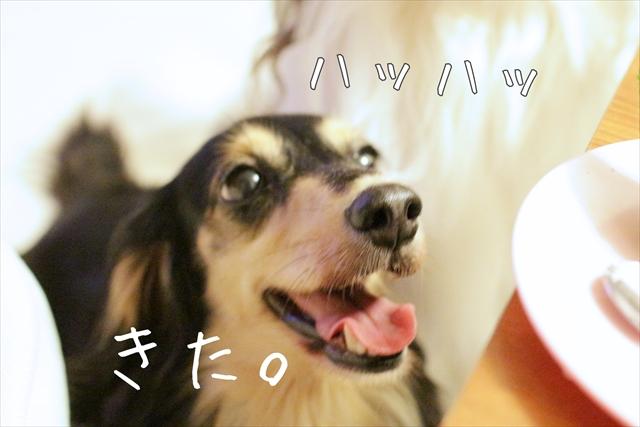 台風と愛犬とワタシ