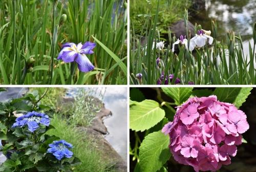 慶沢園の花
