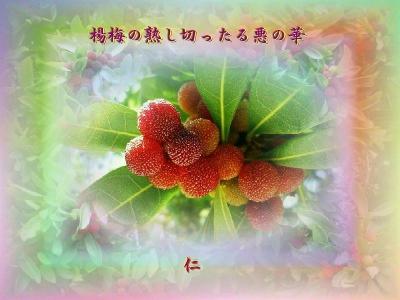『 楊梅の熟し切ったる悪の華 』平和の砦575交心zrt2607