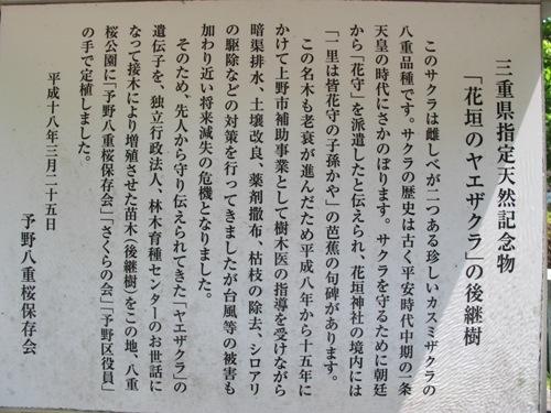 忍者回廊3 (250)