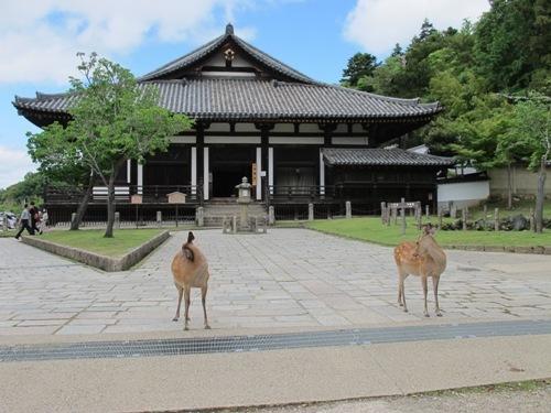 東大寺 (127)