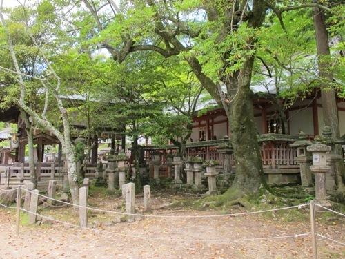 東大寺 (118)
