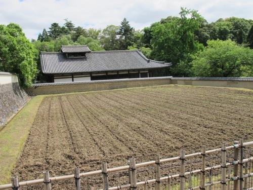 東大寺 (182)