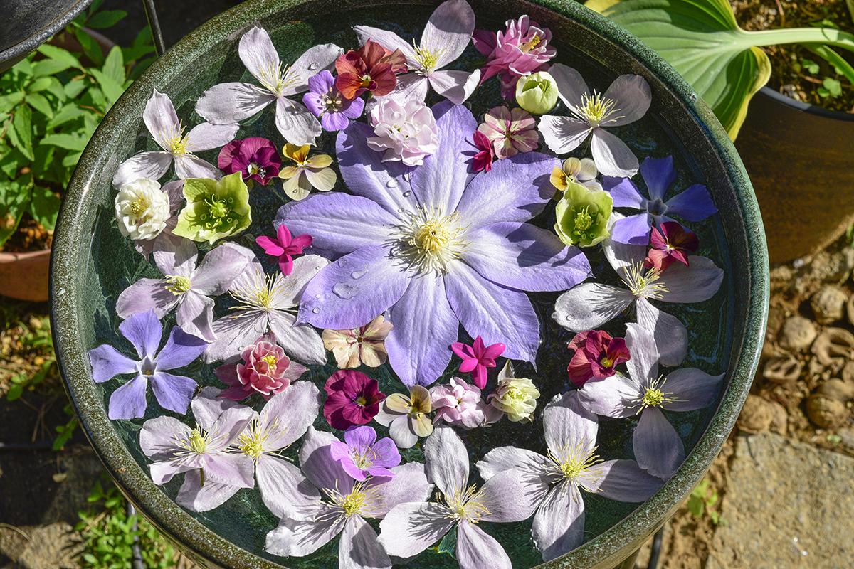 剪定した花