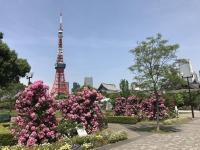 芝公園の花壇
