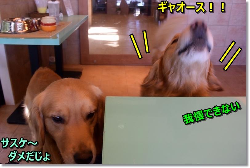 DSC_2418サスケ~!