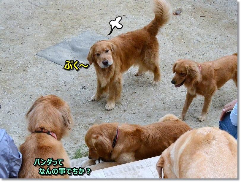 DSC_2609ぷく~