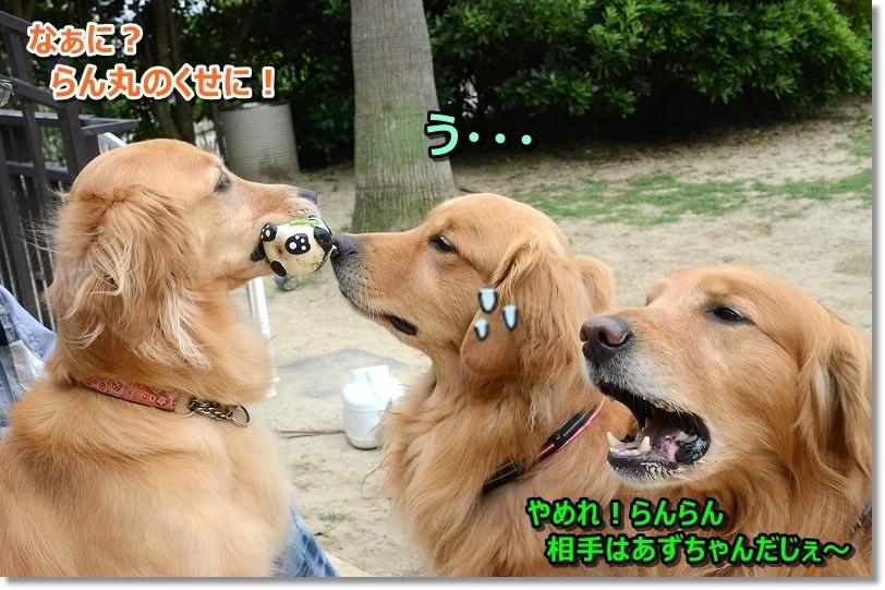 DSC_2638怒られるじぇ~!