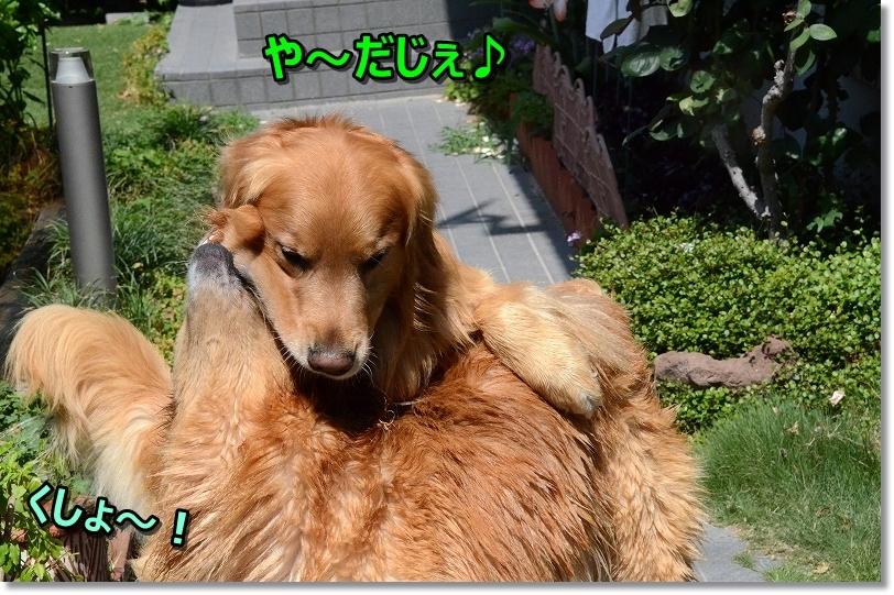 DSC_2738や~だじぇ~