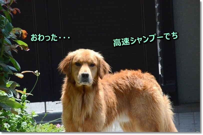 DSC_2786おわったじょ~
