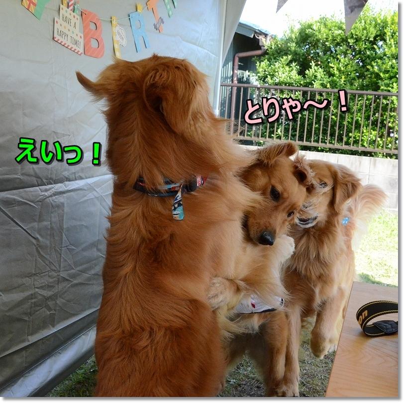 DSC_3236えい!と!