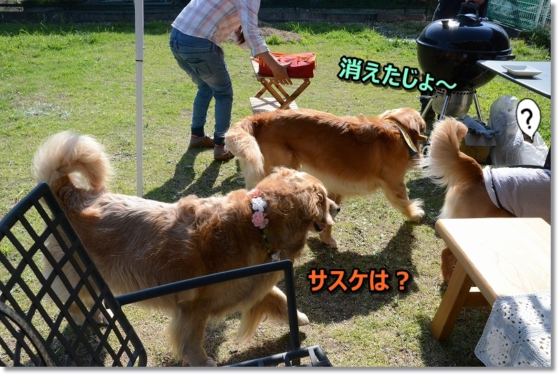 DSC_3245しゃしゅは?