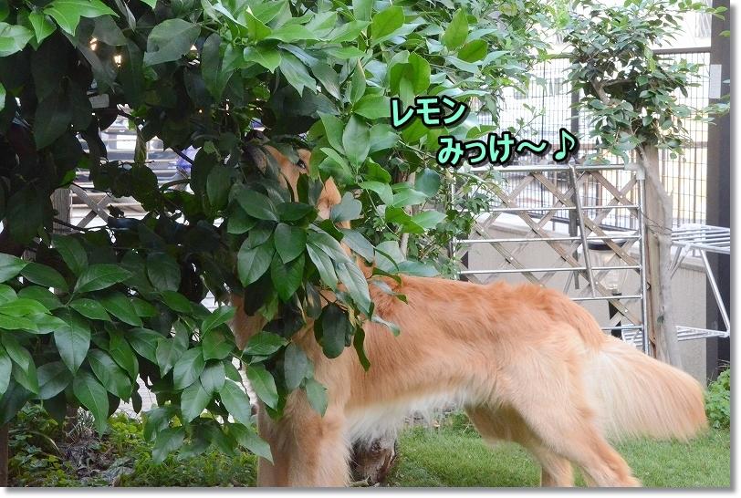 DSC_2833みっけ~