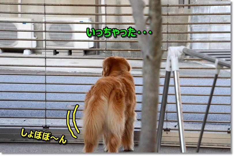 DSC_2835あ~