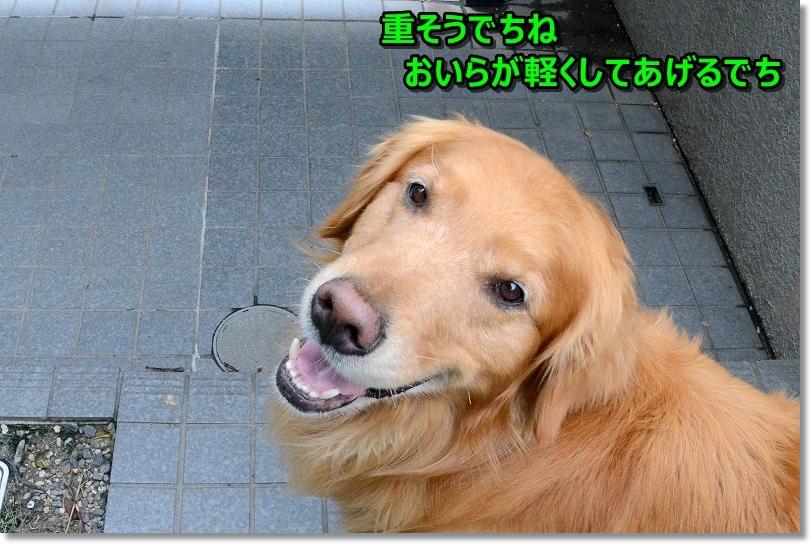 DSC_2889いっぱい~
