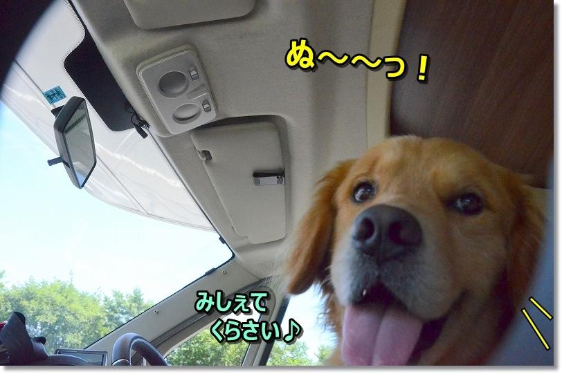 DSC_3957ぬ~