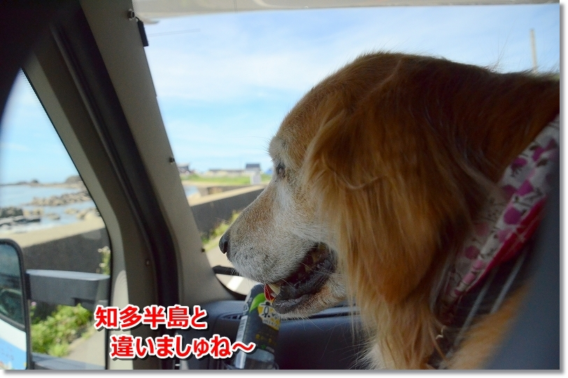 DSC_3981日本かいの海は違う