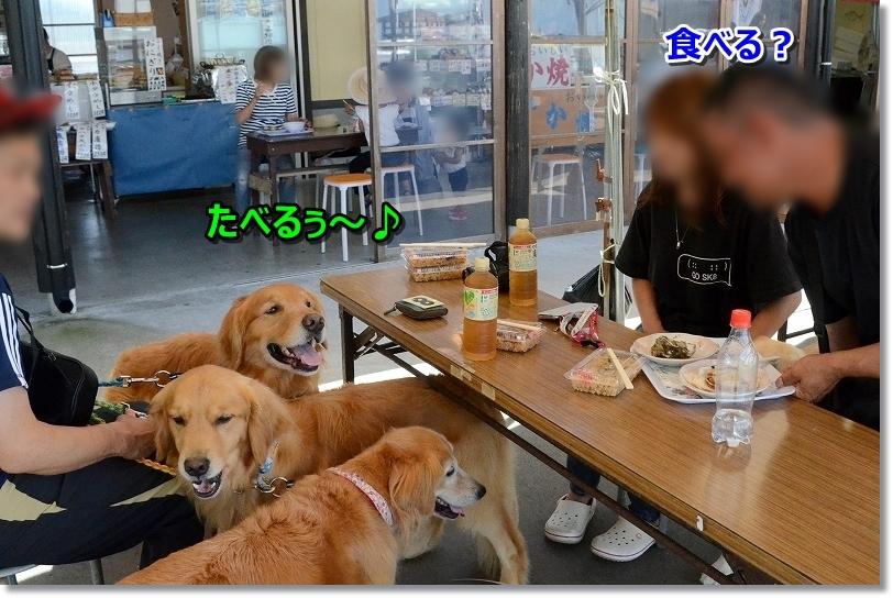 DSC_3994食べる?たべる~