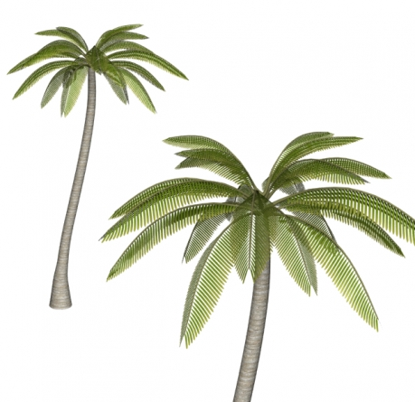 3D椰子の木完成画像1