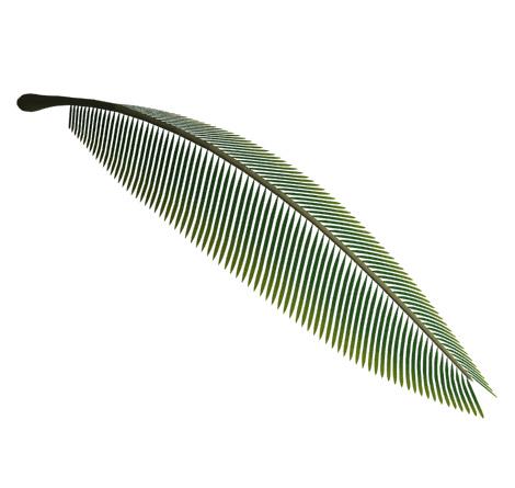 3D椰子の木枝葉レンダリング2