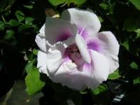 2018-06-09花巻薔薇園034