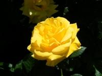 2018-06-09花巻薔薇園032