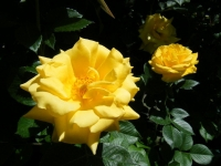 2018-06-09花巻薔薇園031