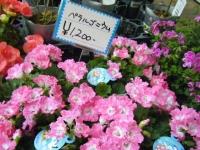 21回大船渡椿祭り2018-03-10重箱石216